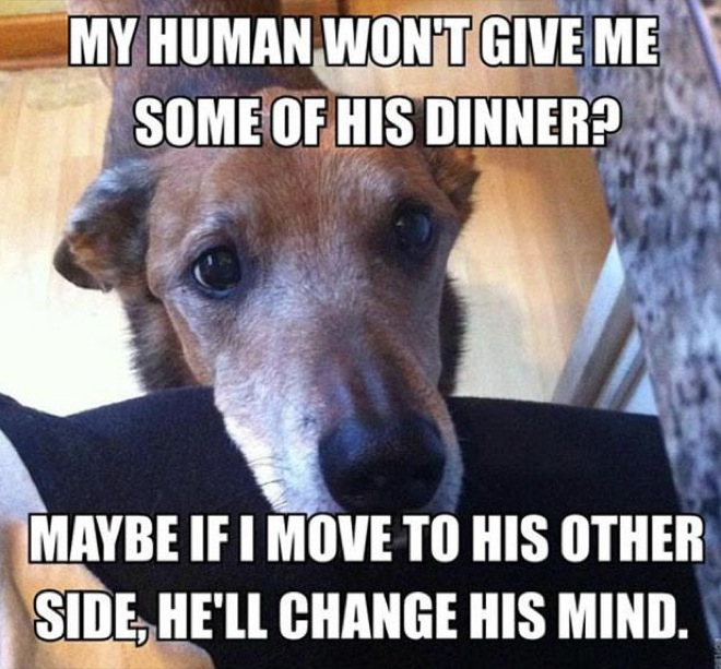 hilarious-dog-owners-situations-11