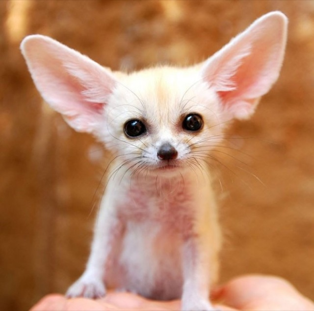 These Adorable Animals Will Make Your Heart Explode From - 32 adorable animals