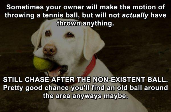8-life-hacks-dog-2
