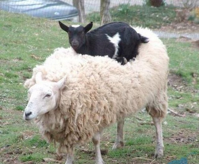 Hilarious Animals Being Perfect Jerks Page Of - 32 animals complete jerks
