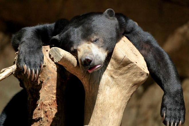 animals-hangover-5