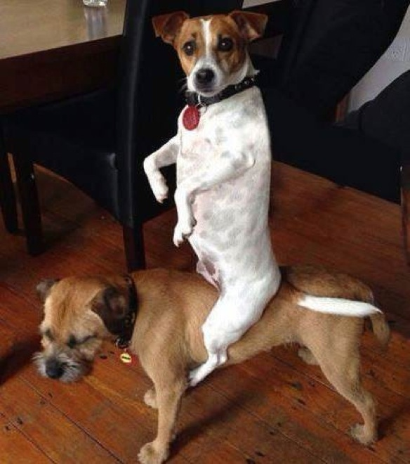 Funny Photos Of Guilty Dogs Whove Been Caught In The Act - 15 funny photos of dogs standing awkwardly 4 is the best ever