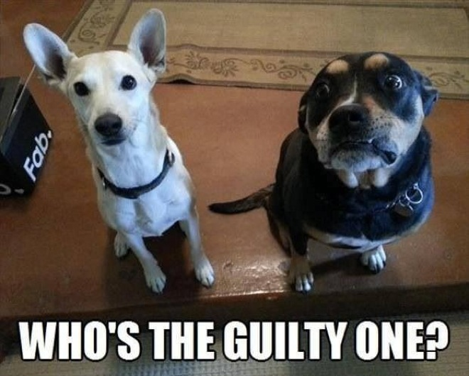Funny dog face meme - photo#46
