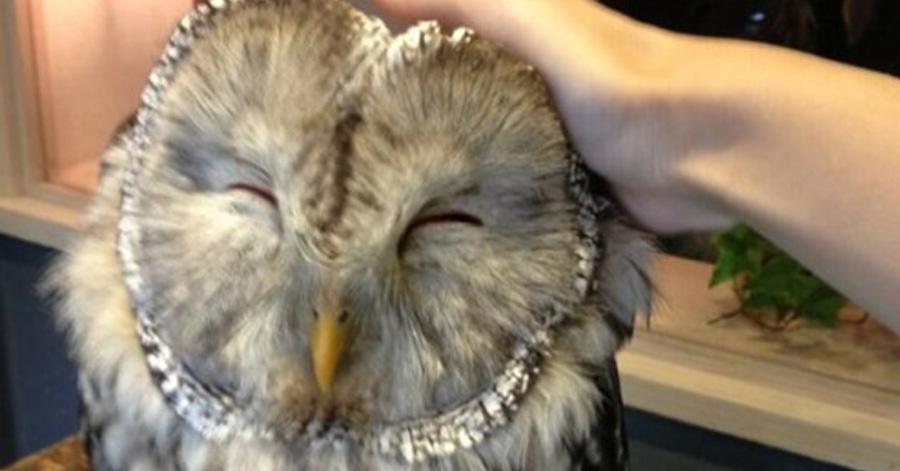 owl-cafe-ft