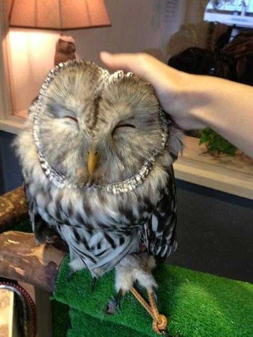 owl-cafe-japan-11