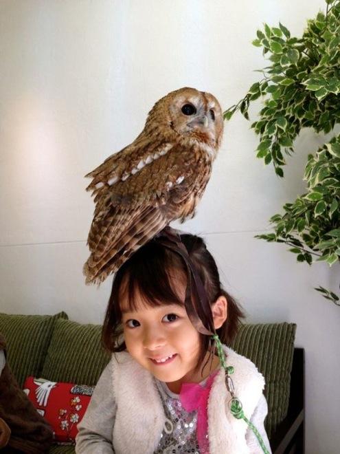 owl-cafe-japan-12
