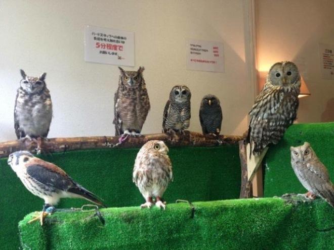 owl-cafe-japan-13