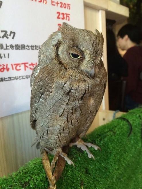 owl-cafe-japan-14