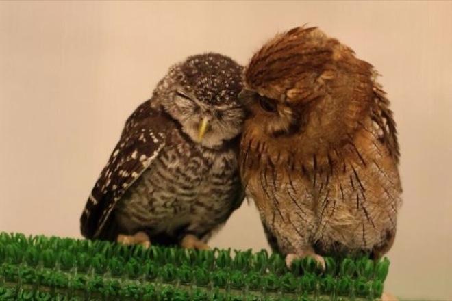 owl-cafe-japan-15