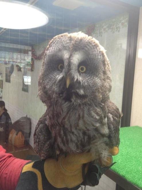 owl-cafe-japan-16