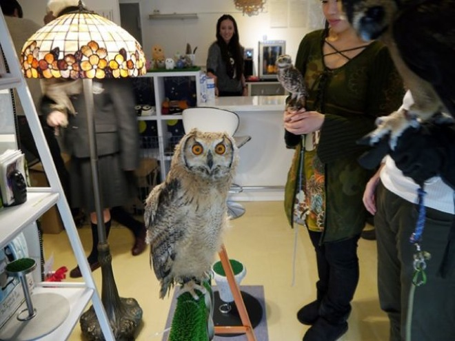 When You See What They Do In This Coffee Shop In Japan Youll - Owlet kitten meet coffee shop become best friends