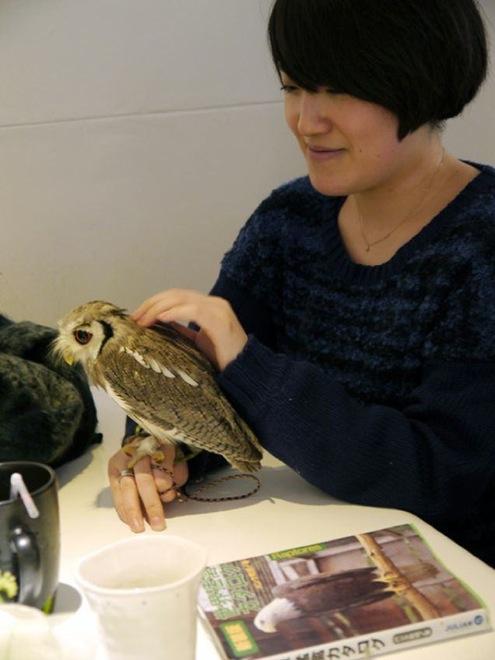 owl-cafe-japan-8