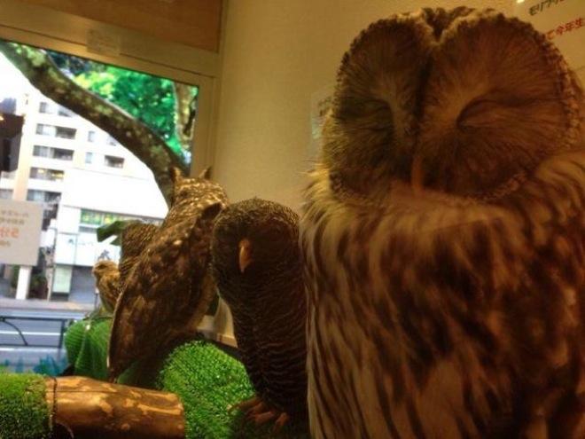 owl-cafe-japan-9