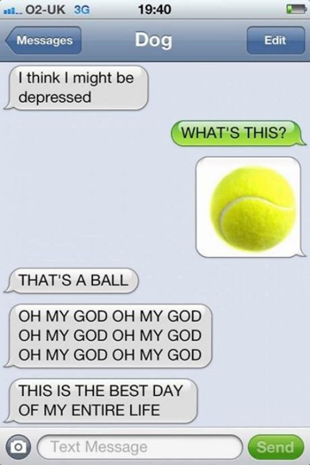 texts-from-dogs-7