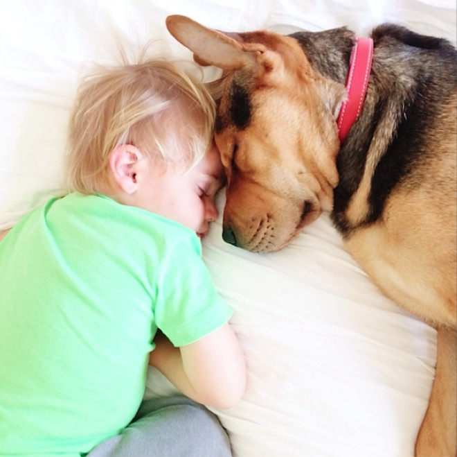 toddler-naps-with-puppy-6