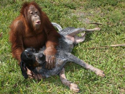 Unusual-animal-friendships-03
