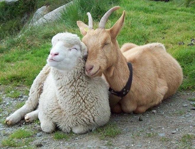 Unusual-animal-friendships-37