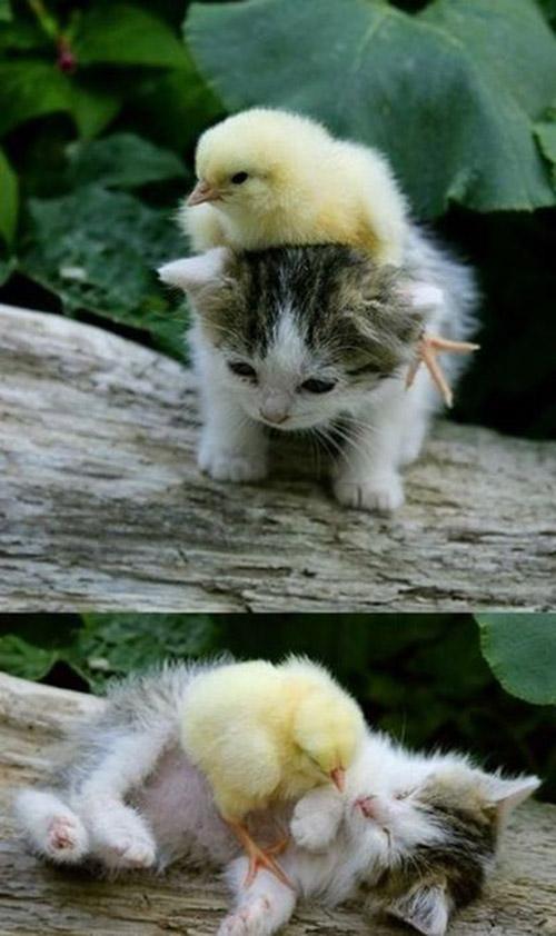 Unusual-animal-friendships-38
