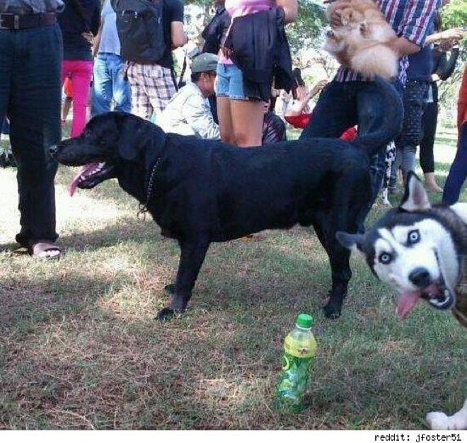 Of The Most Hilarious Animal Photobombs That Ever Happened - The 39 funniest animal photobombs of all time