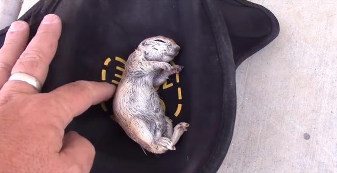 man-saves-squirrel-2
