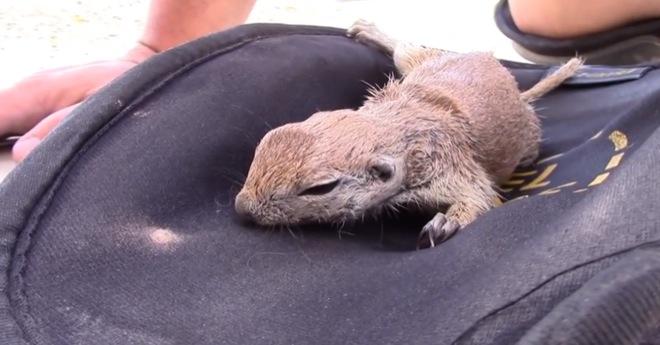 man-saves-squirrel-3