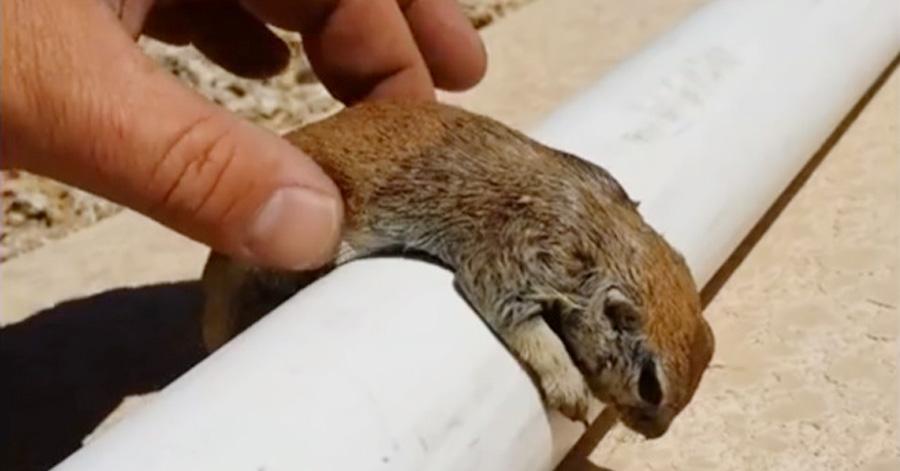 man-saves-squirrel