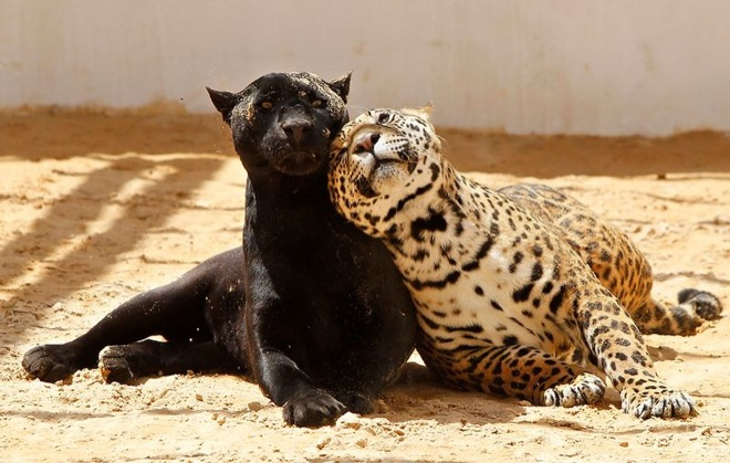 unlikely-animal-friendships-1