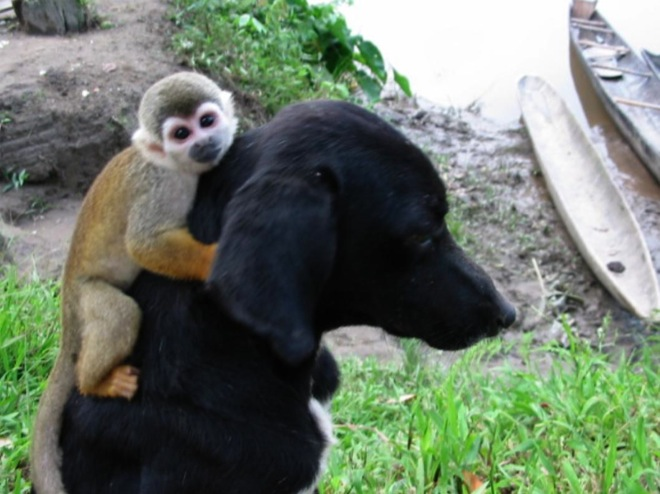 unlikely-animal-friendships-10