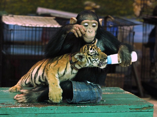 unlikely-animal-friendships-11