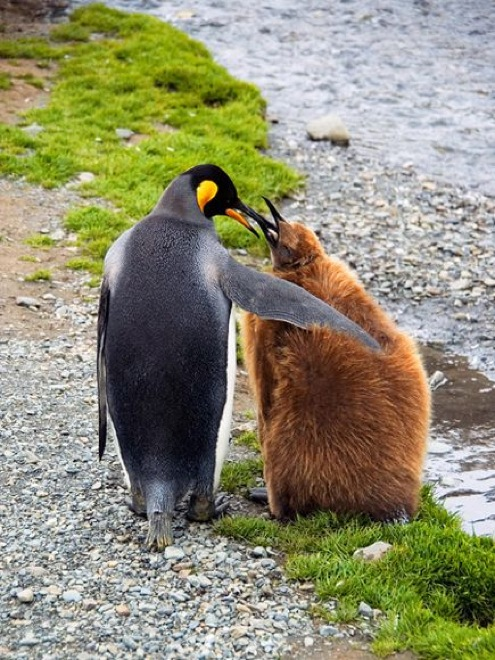 unlikely-animal-friendships-13
