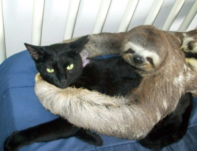 unlikely-animal-friendships-21