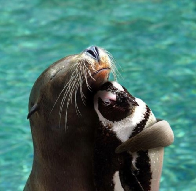 unlikely-animal-friendships-22