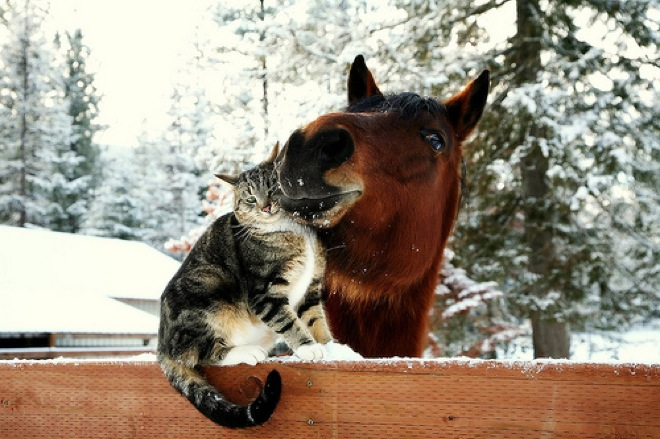 unlikely-animal-friendships-3