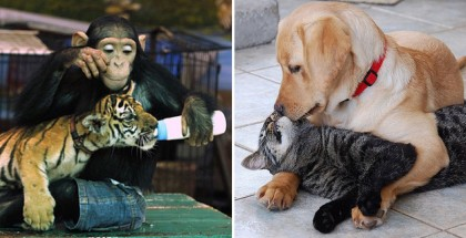 unlikely-animal-friendships