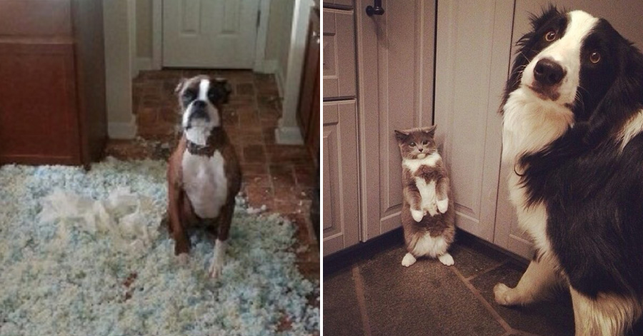 15-dogs-who-really-didnt-do-it