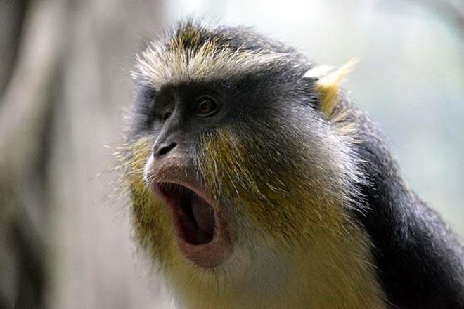 23-hilarious-photos-of-surprised-animals-1