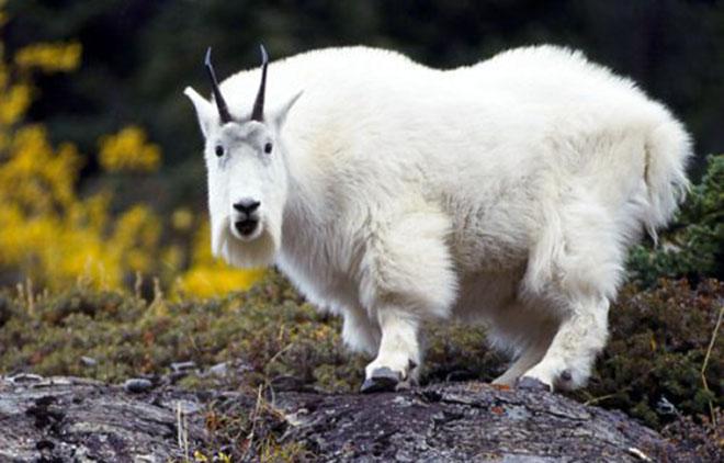 23-hilarious-photos-of-surprised-animals-11