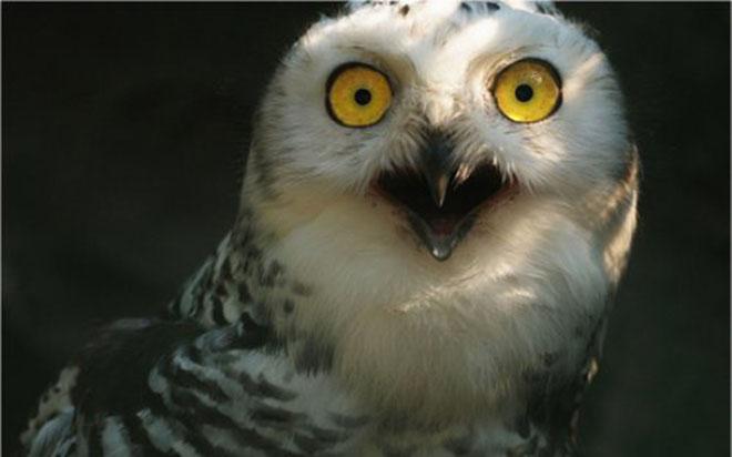 23-hilarious-photos-of-surprised-animals-12
