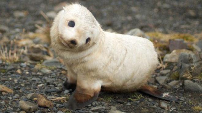 23-hilarious-photos-of-surprised-animals-14