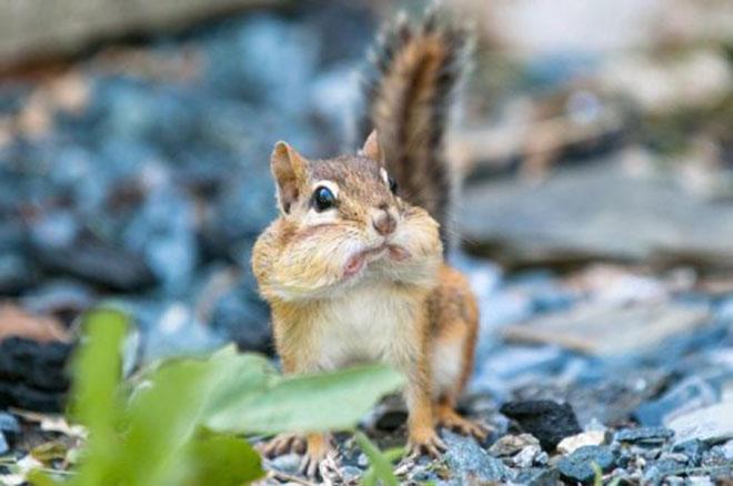 23-hilarious-photos-of-surprised-animals-16