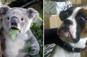 23-hilarious-photos-of-surprised-animals