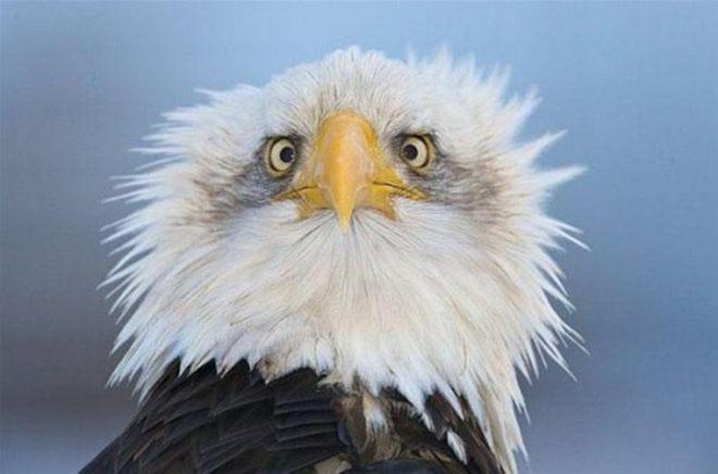 23-hilarious-photos-of-surprised-animals-4