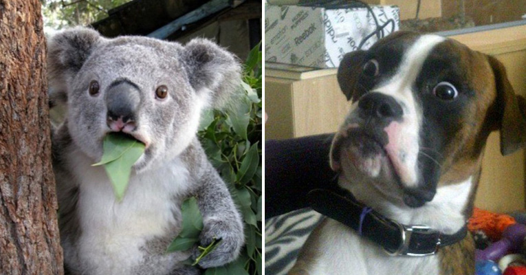 23-hilarious-photos-of-surprised-animals