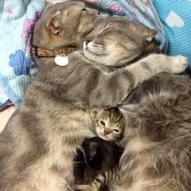 30-animals-cutest-parents-10
