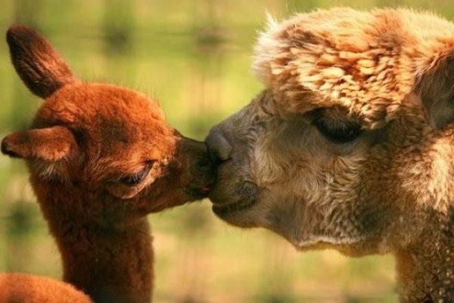 30-animals-cutest-parents-16