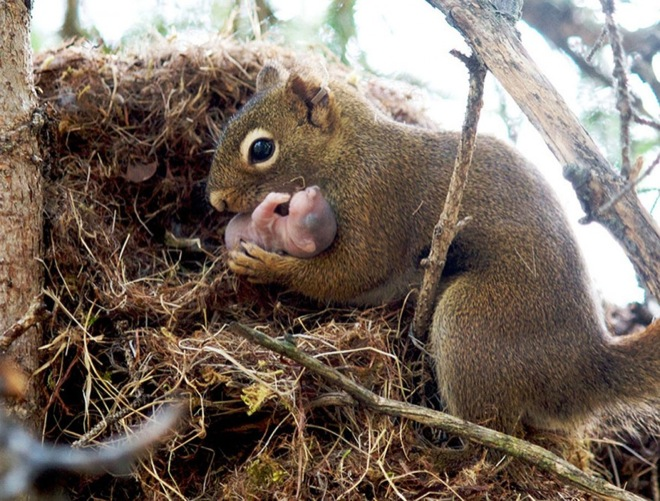 via: pensivesquirrel.wordpress.com