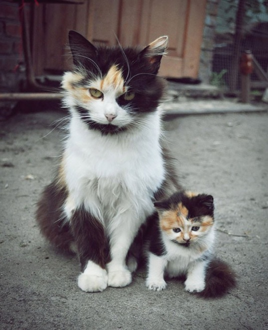 30-animals-cutest-parents-6