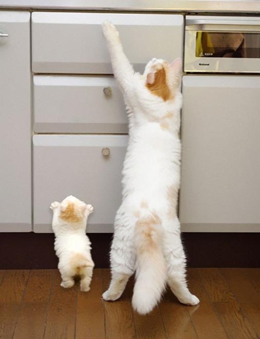 30-animals-cutest-parents-8