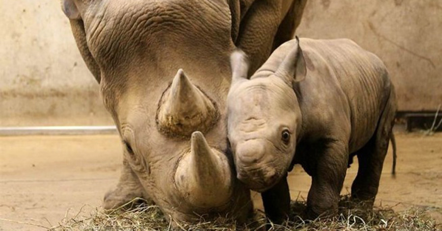 Animals Being The Cutest Parents Ever Page Of - 30 animals cutest parents