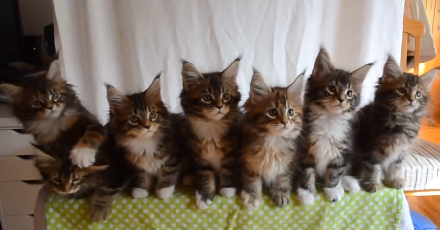 7-kittens